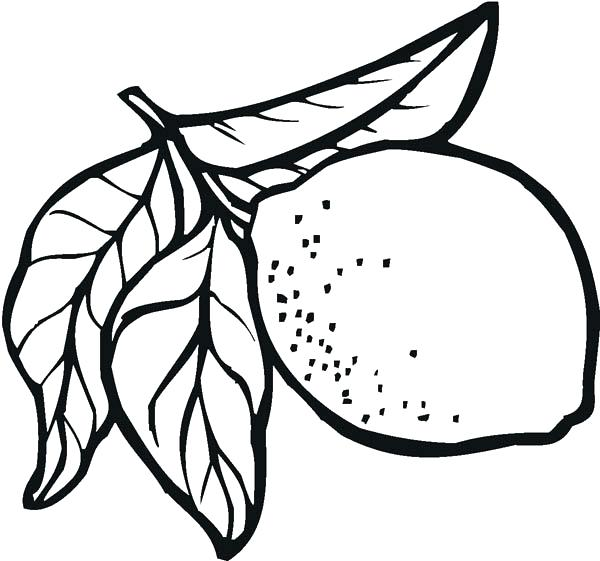 600x561 Lemon Coloring Page Lemon For Sale Coloring Page Lemon Meringue