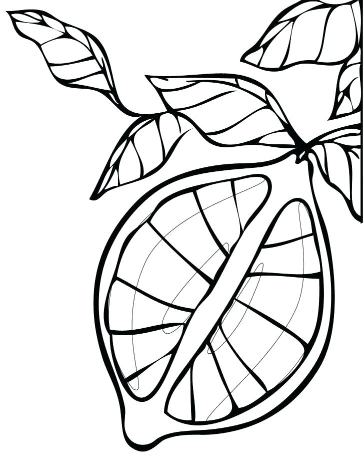 728x942 Lemon Coloring Page
