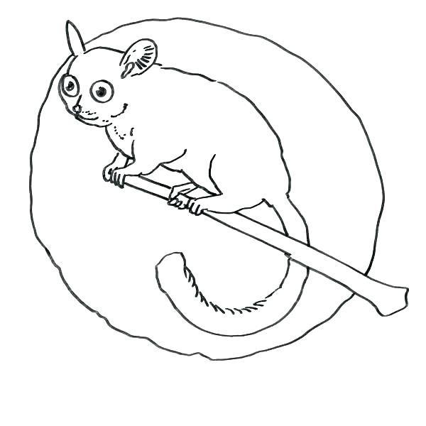 The Best Free Lemur Coloring Page Images Download From 111 Free