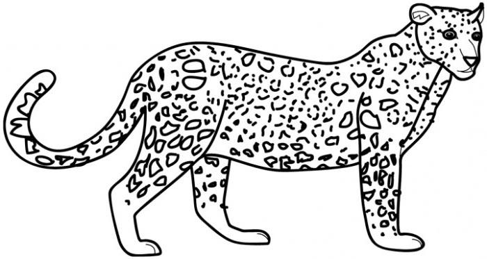 700x373 Leopard Coloring Pages