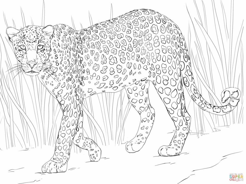 1024x768 Leopard Coloring Pages Get Bubbles