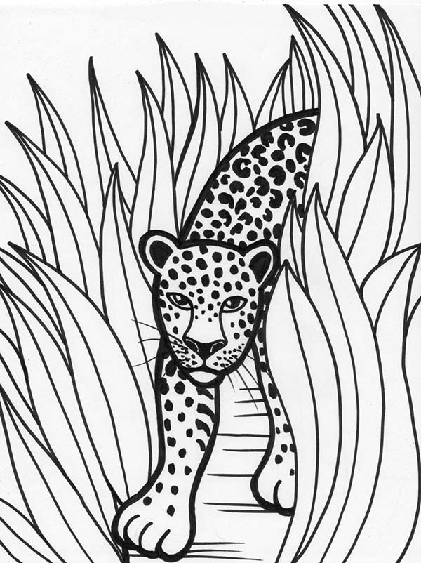 600x802 Leopard Rainforest Predator Coloring Page