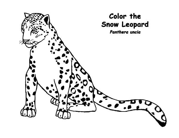 600x464 Snow Leopard Coloring Pages Batch Coloring
