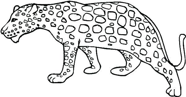 600x312 Snow Leopard Coloring Pages Snow Leopard Coloring Pages Leopard
