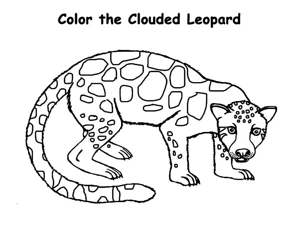 600x464 The Clouded Leopard Coloring Pages Batch Coloring