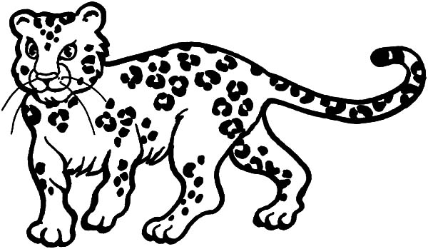 600x349 Young Leopard Coloring Pages Batch Coloring