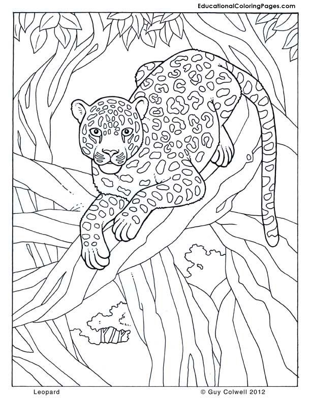612x792 Leopard Jungle Colouring Pages