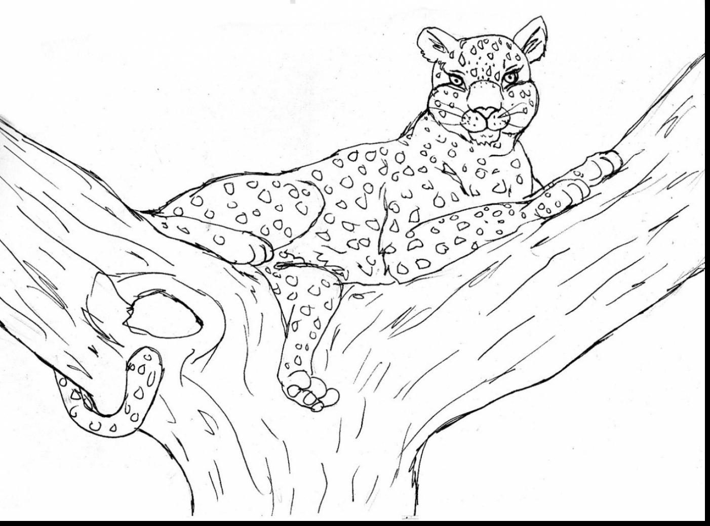 1402x1038 Great Cheetah Coloring Page New Coloring Sheets