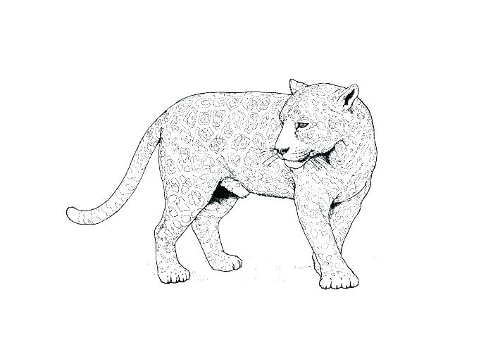 700x500 Gecko Coloring Page Leopard Gecko Coloring Pages Leopard Pictures