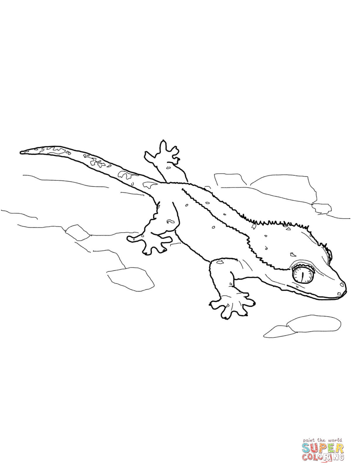 1200x1600 Leopard Gecko Coloring Page Free Printable Coloring Pages Leopard