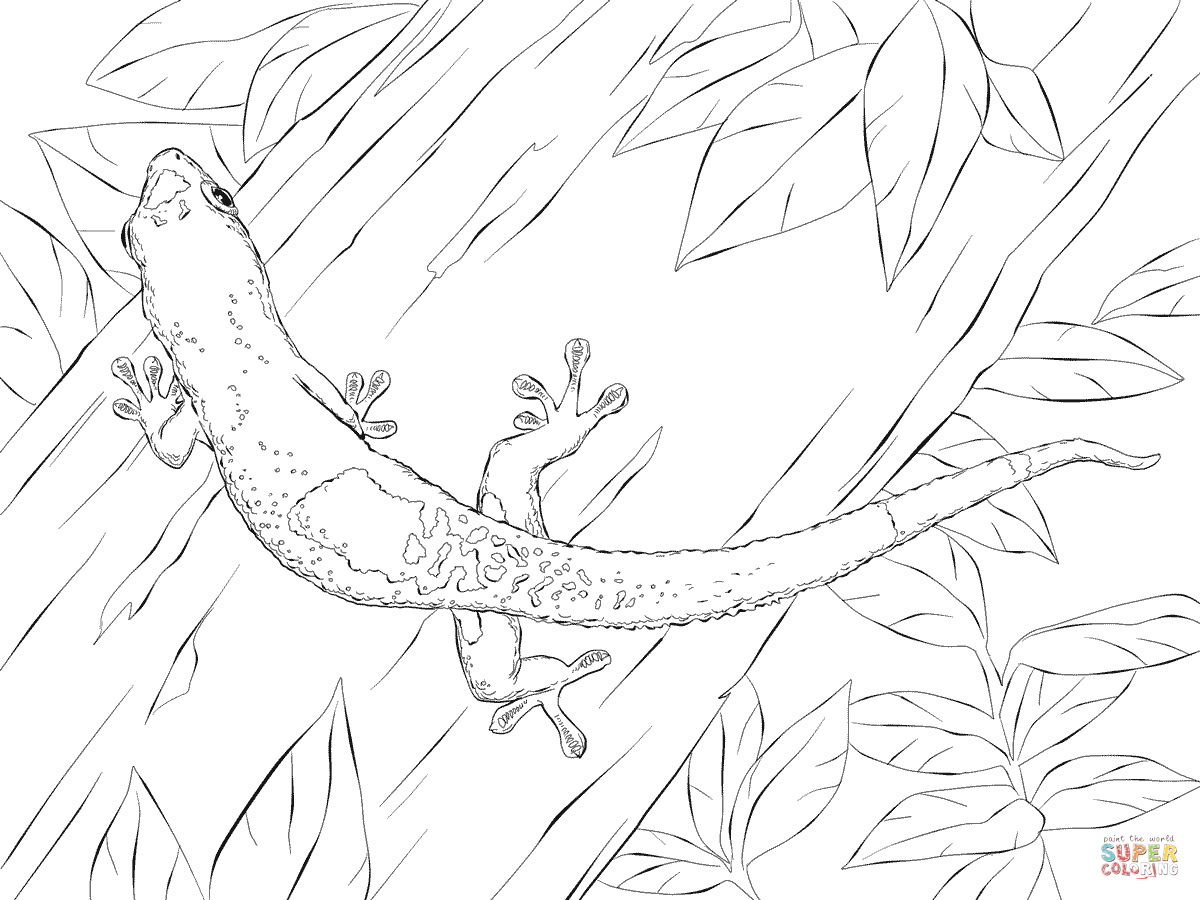 1200x900 Leopard Gecko Coloring Page Free Printable Coloring Pages Leopard