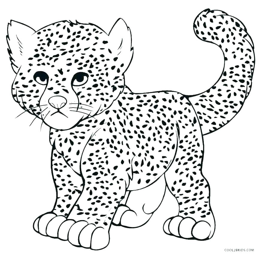 878x857 Color Cheetah Color Cheetah Cheetah Coloring Book Coloring Pages