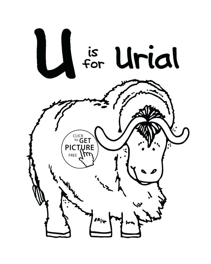 736x920 Letter U Coloring Page Together With Letter U Alphabet Coloring