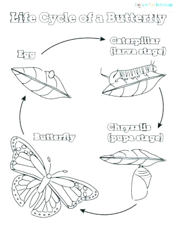 618x798 Butterfly Life Cycle Coloring Pages Butterfly Life Cycle Colouring
