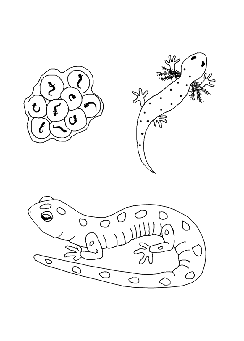 825x1150 Free Life Cycle Coloring Pages Stuwahacreations