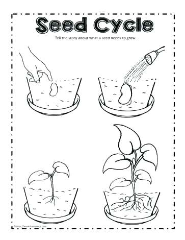 363x470 Frog Life Cycle Coloring Page Plant Life Cycle Coloring Page Plant