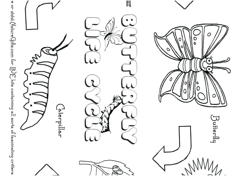 827x609 Life Cycle Of A Butterfly Coloring Page Selection Of Free
