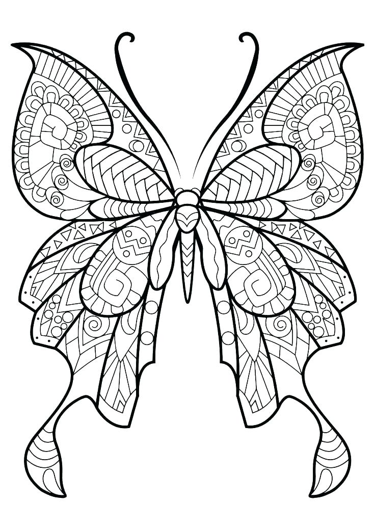 736x1040 Monarch Butterfly Printable Pictures Life Cycle Of A Coloring Page