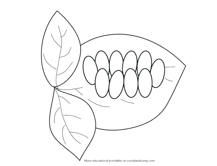 736x566 Plant Life Cycle Coloring Page Plant Life Cycle Coloring Page