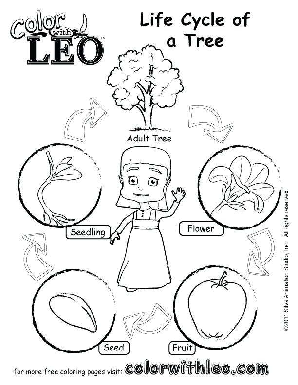 612x792 Plant Life Cycle Coloring Pages Free Coloring Free Coloring Pages