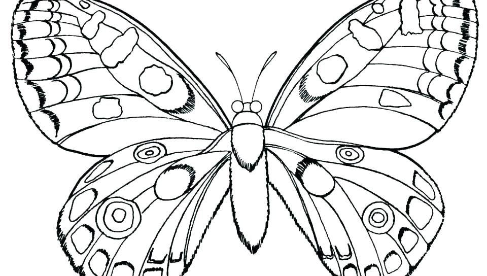 960x544 Coloring Pages Of A Butterfly Deepart