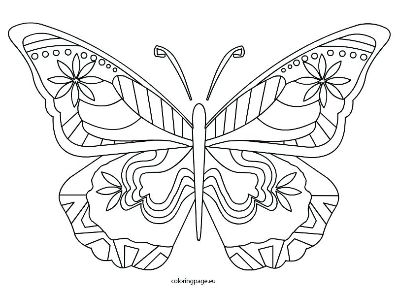 808x595 Butterfly Coloring Pages Pdf Life Cycle Of A Butterfly Coloring