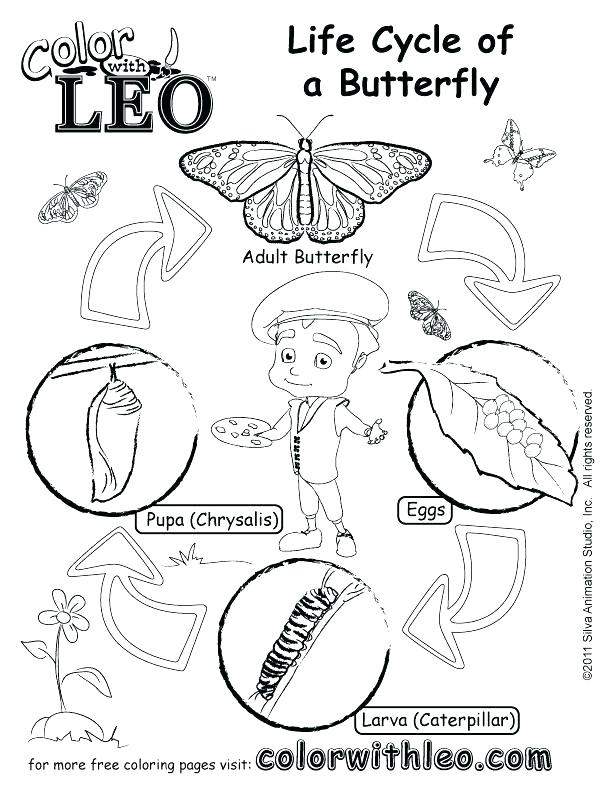 612x792 Butterfly Life Cycle Coloring Pages Butterfly Life Cycle Coloring
