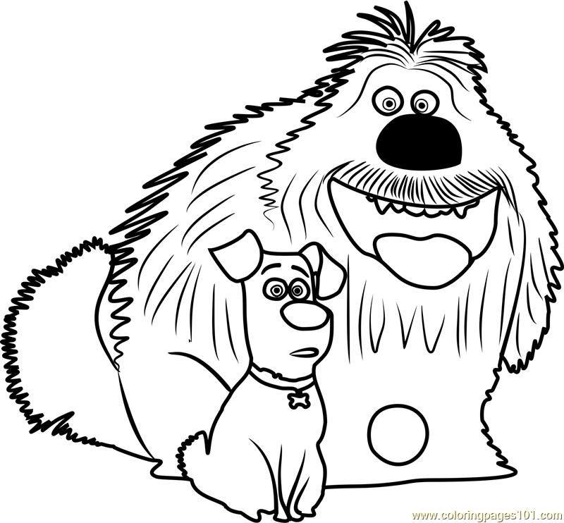 800x742 Secret Life Of Pets Coloring Pages Pdf