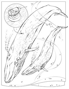 Life Science Coloring Pages