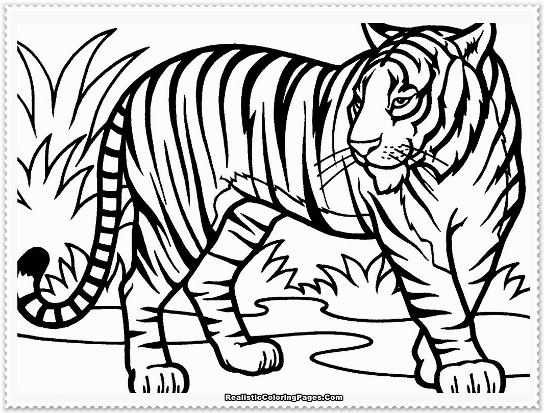 1066x810 Tiger Coloring Pages The Sun Flower Pages