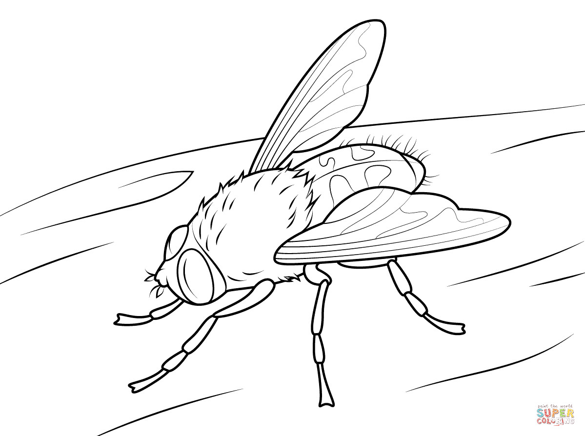 1199x894 Lightning Bug Coloring Pages Fireflies