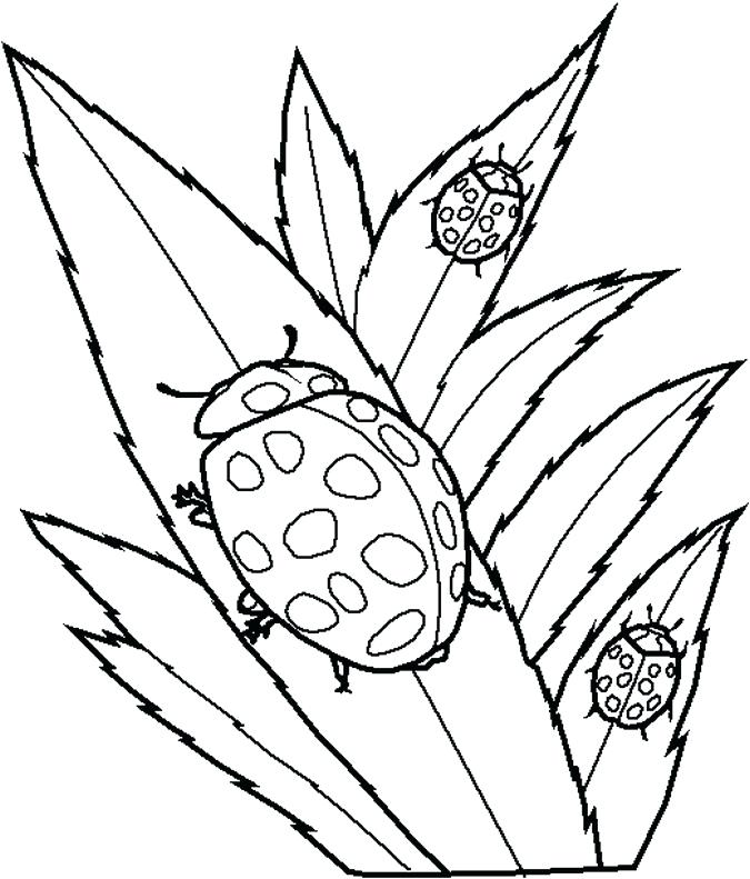 675x791 Bug Pictures To Color Coloring Realistic Bug Coloring Pages