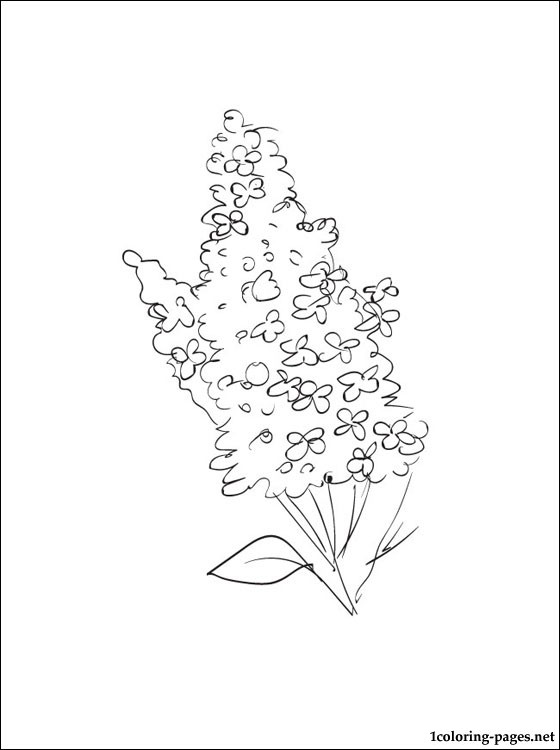 Lilac Coloring Pages