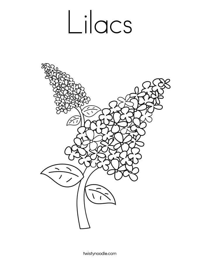 685x886 Lilacs Coloring Page