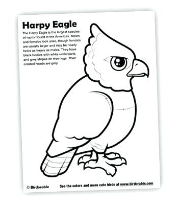 349x403 New Coloring Pages For Harpy Eagle Lilac Breasted Roller Coloring