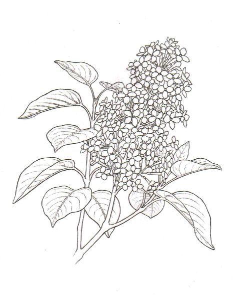 472x611 Art Picture Monet Doodle