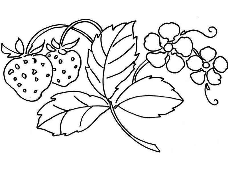 800x600 Strawberry And Leaves Coloring Page Fruit Coloring Page