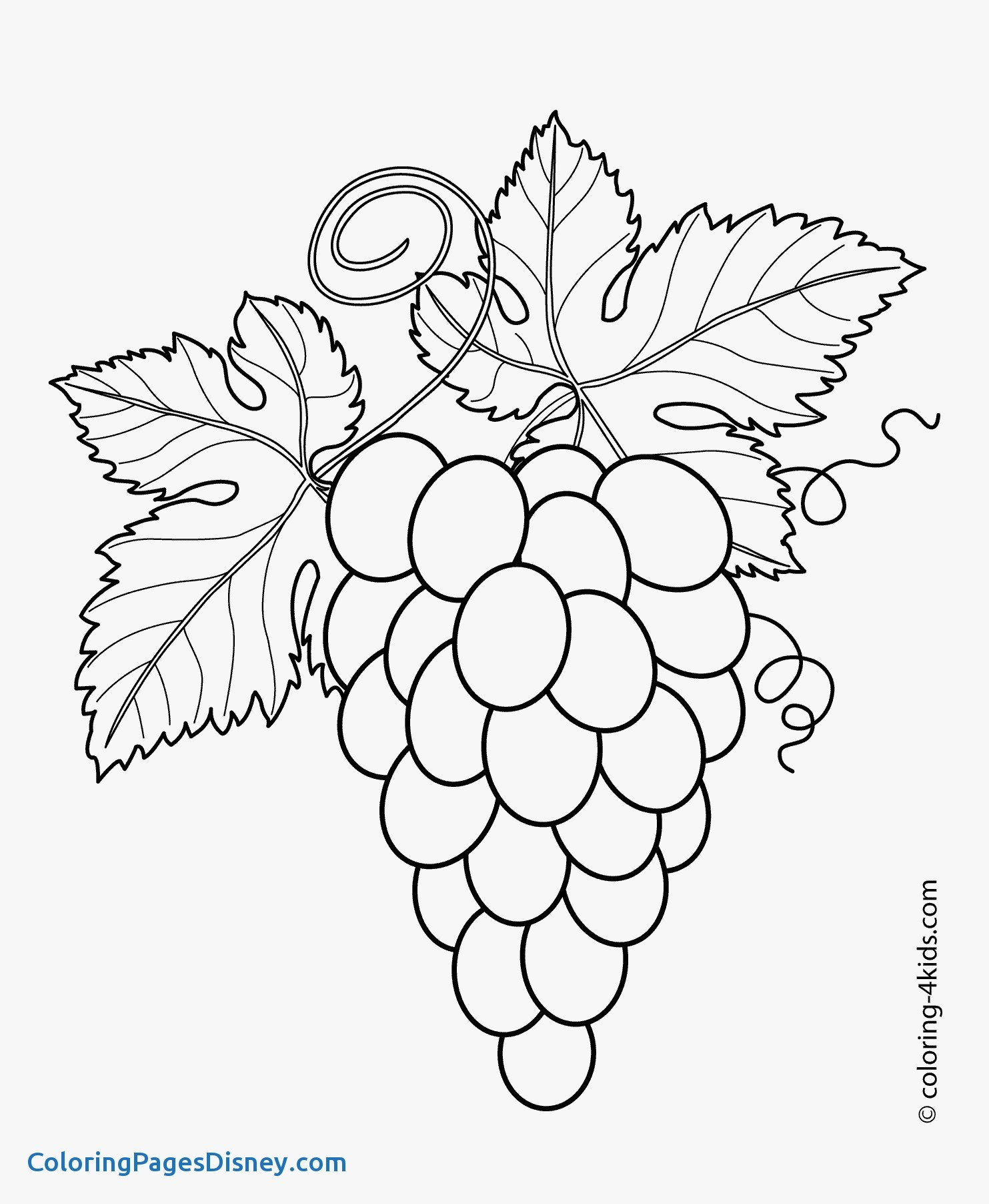 1483x1804 Syringa Lilac Coloring Pages Fresh Flower Coloring Pages Lilac