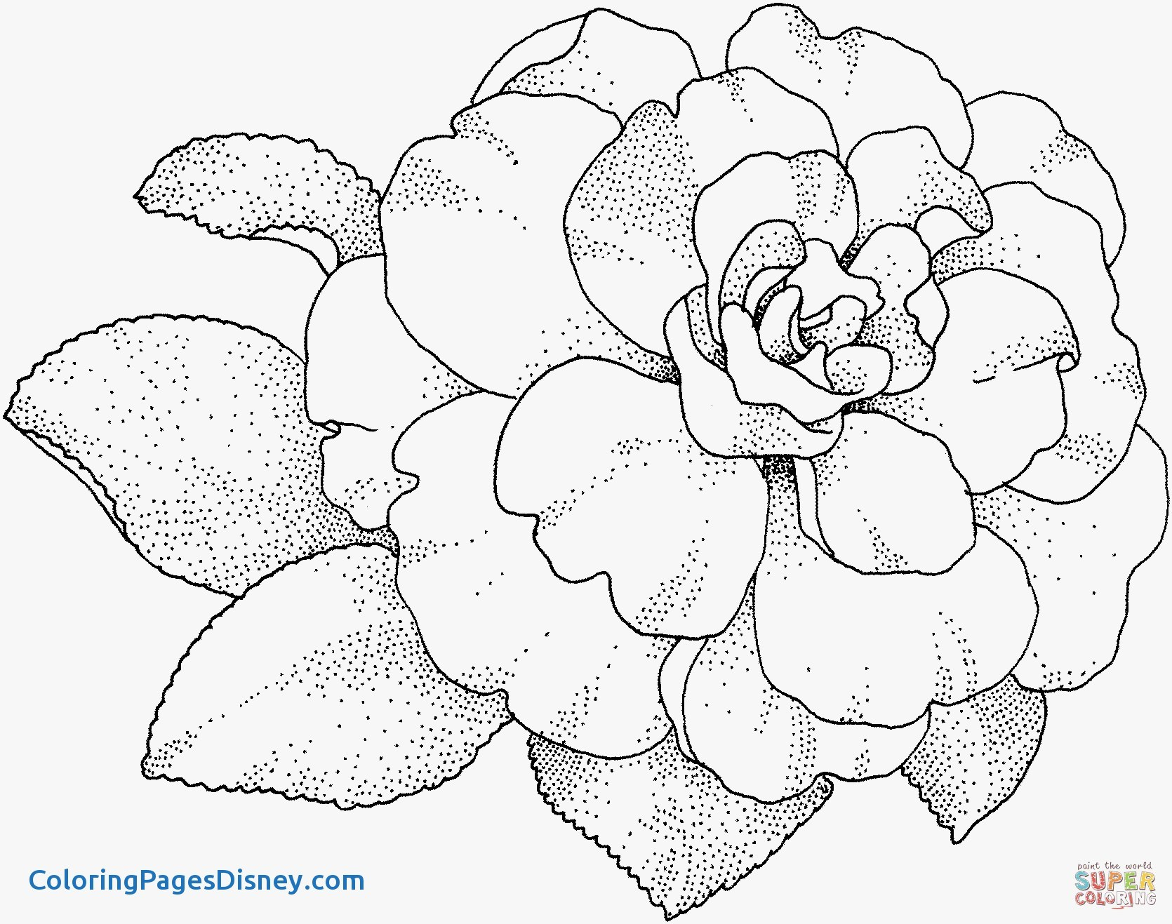 1670x1317 Syringa Lilac Coloring Pages Luxury Camellia Flower Coloring Page