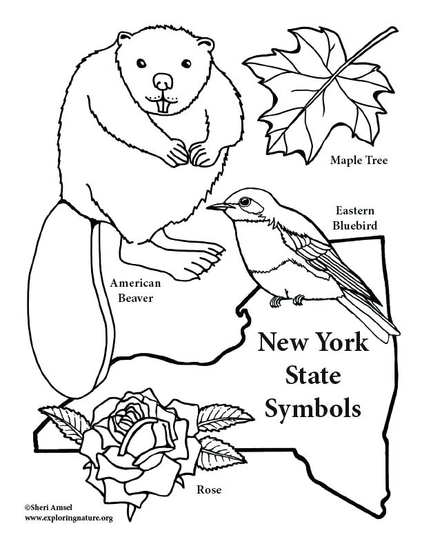 612x792 Beautiful Eastern Bluebird Coloring Page Coloring Pages