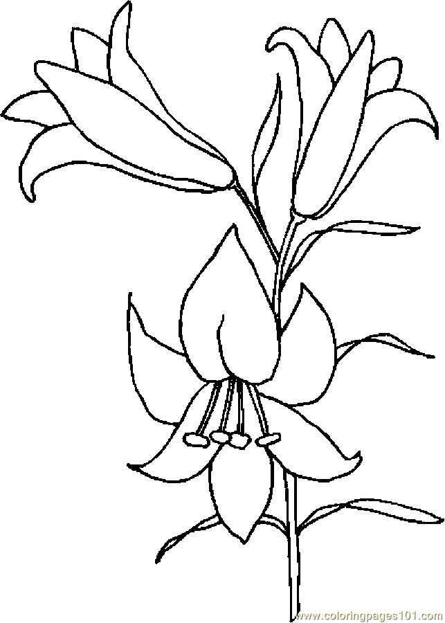 643x900 Easter Lily Drawing Lily Coloring Page Patterns