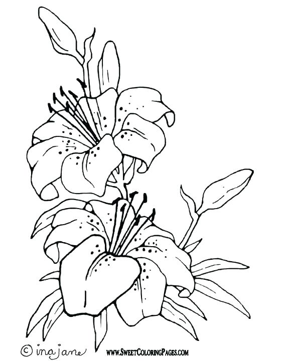 576x720 Ideas Lily Coloring Pages Or Recent Posts Printable Lily Pad