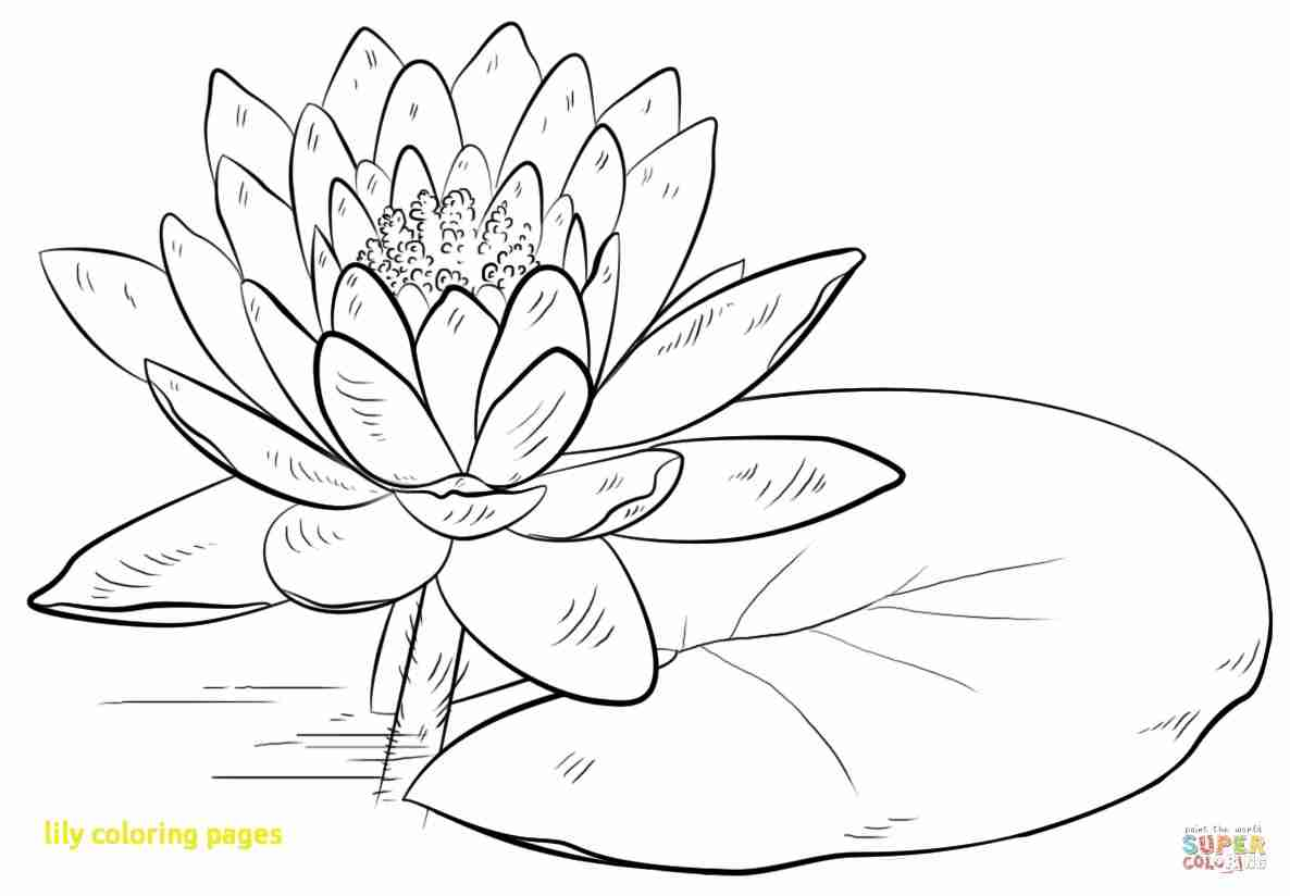 1186x824 Lilies Coloring Pages Free Best Lily Olegratiy