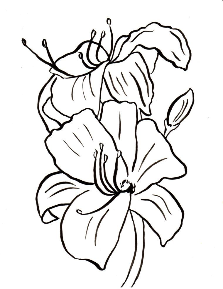 760x987 Lily Coloring Page