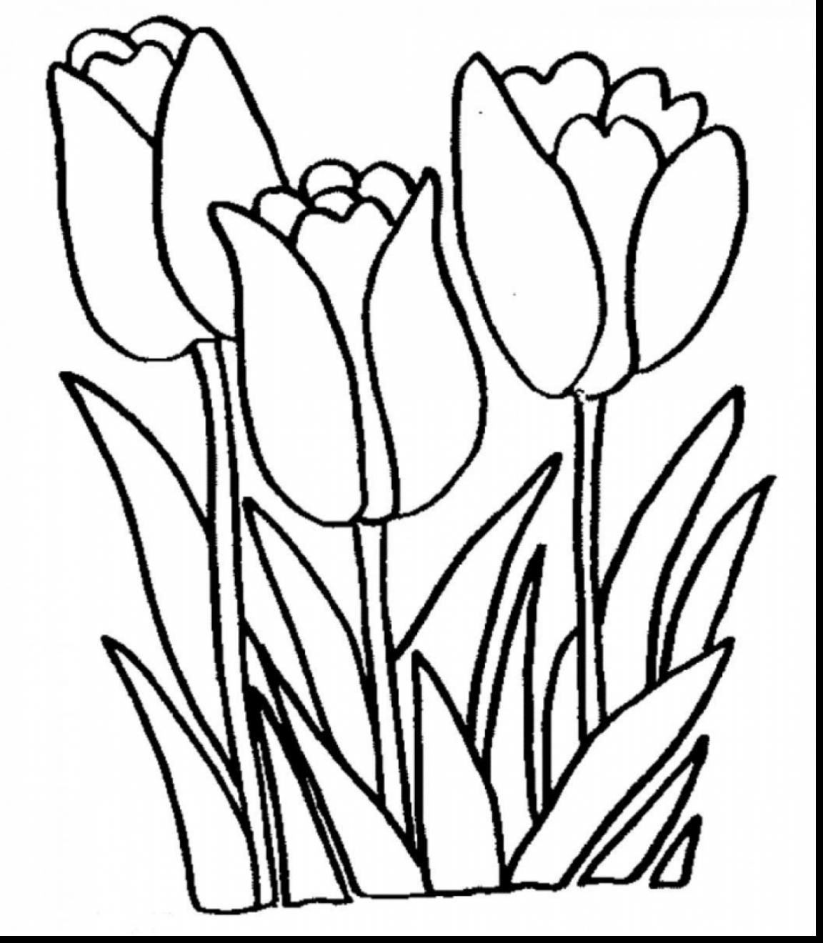 1152x1320 Arum Lily Coloring Pages For Kids Page Flowers Peace Frog Pad