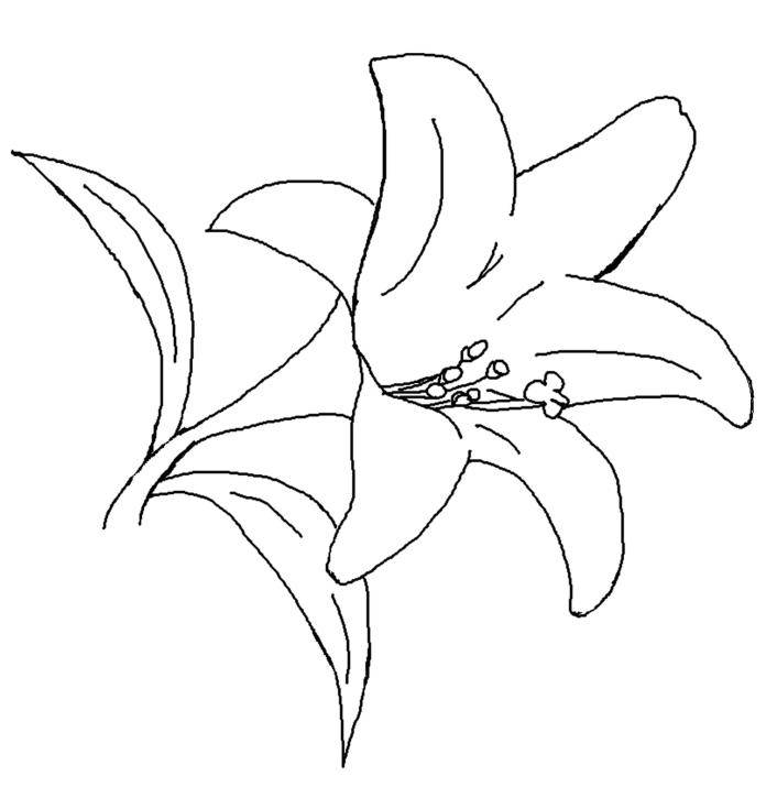 696x715 Lily Coloring Pages To Download And Print For Free