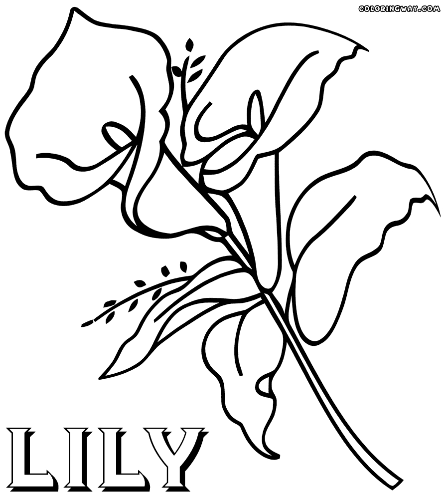 895x1000 New Lily Flower Coloring Pages Gallery Printable Coloring Sheet