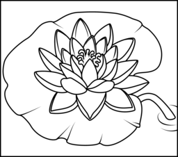 256x226 Water Lily