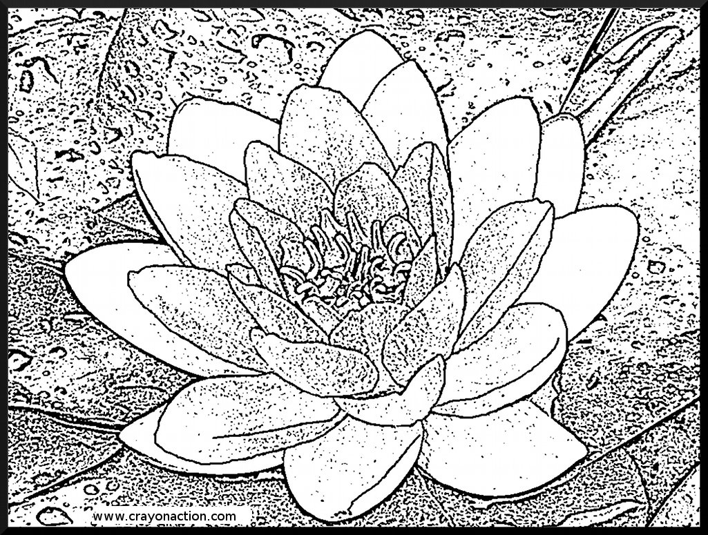 1025x775 Water Lily Coloring Page Crayon Action Coloring Pages