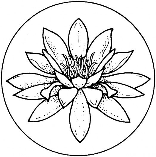 524x525 Water Lily Coloring Page To Use As An Embroidery Pattern